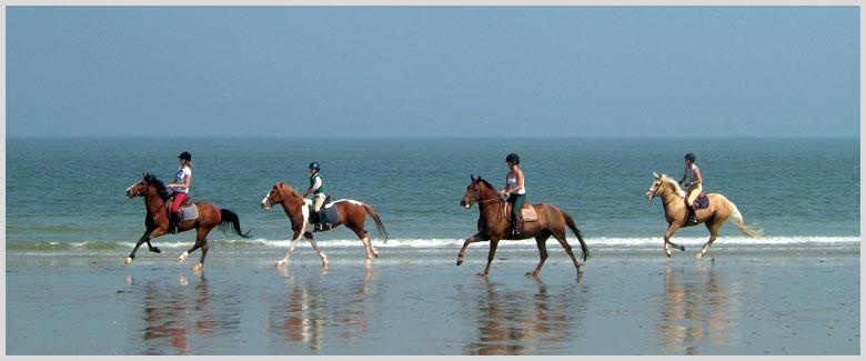Nos stages d'équitation